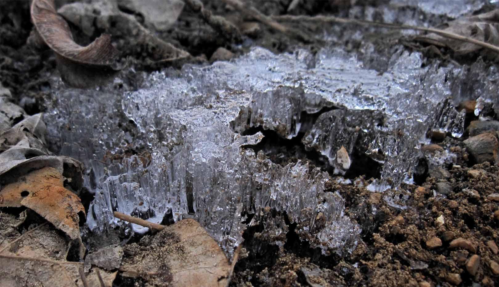 Strange pawprints in the ice for Explain soil